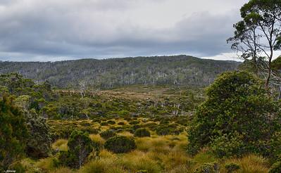 Mt Field Plateau ; Twilight