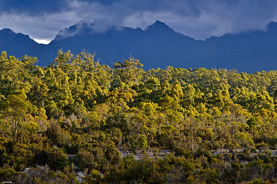 Moutain Rainforest ; South West Tasmania
