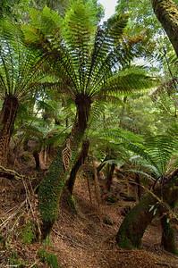 Tarkine Forest