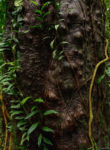 Forest ; Borneo III
