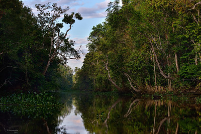 Morning River ; Borneo