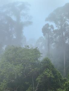 Daybreak ; Borneo