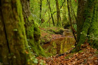 Ebernoe Wood