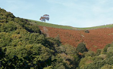Above Hoar Oak Water ;  Exmoor