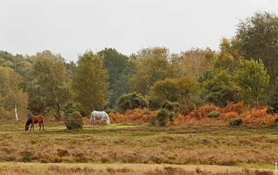 Early Autumn in New Forest