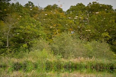 Ebernoe Wood II