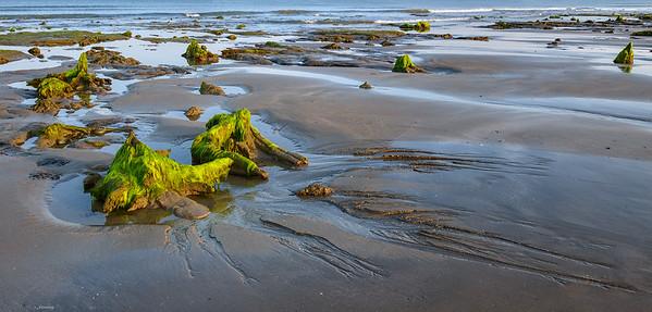 Rising Tide ; Ceredigion