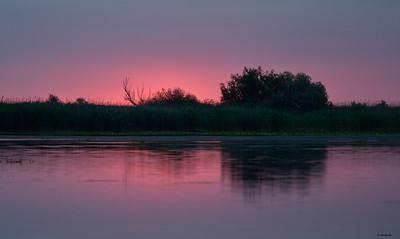 Reeds ; Dawn