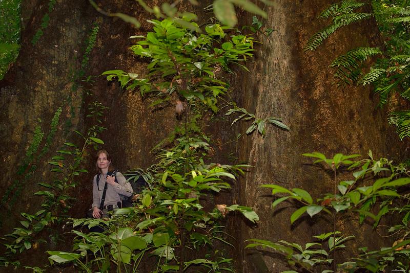 Forest ; Borneo, Sc