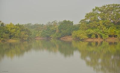 Mangrove Forest II