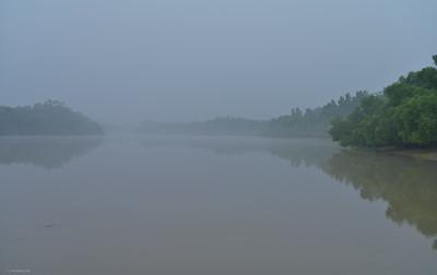 Mangrove; Daybreak