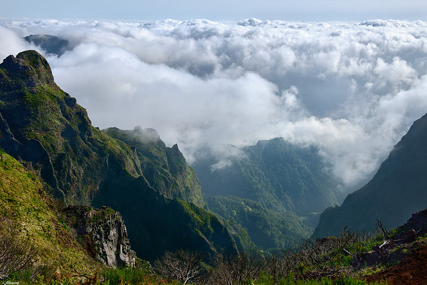 Ilha da Madeira - Island of Wood