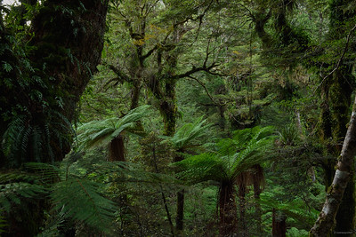 Waikareiti Forest II