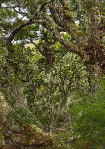 Fiordland ; Palette