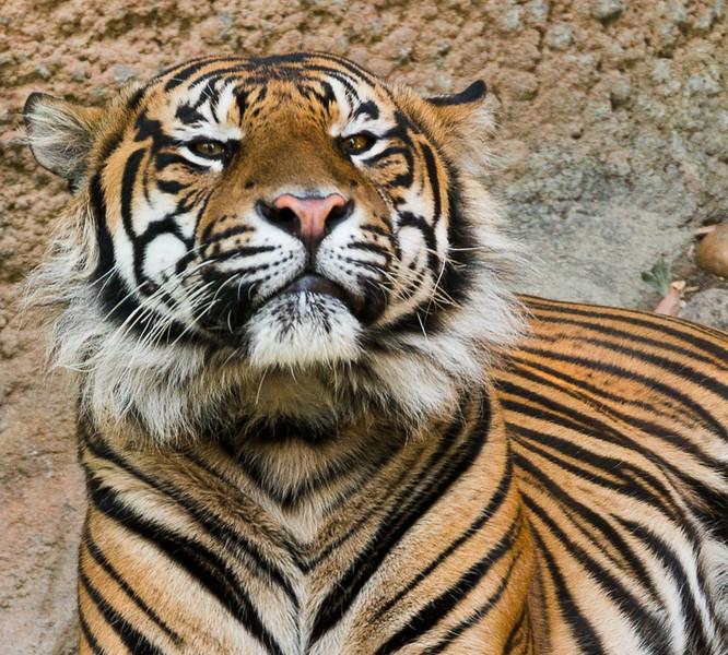 Zoo2015-13