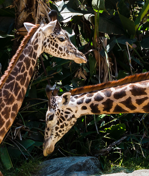 Zoo2015-5
