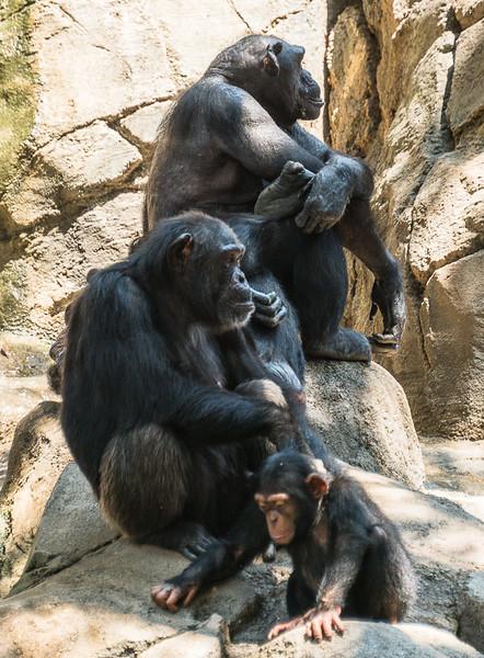 Zoo2015-3