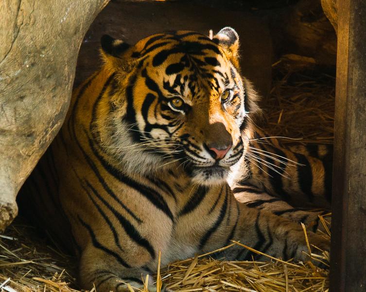 Zoo2015-15