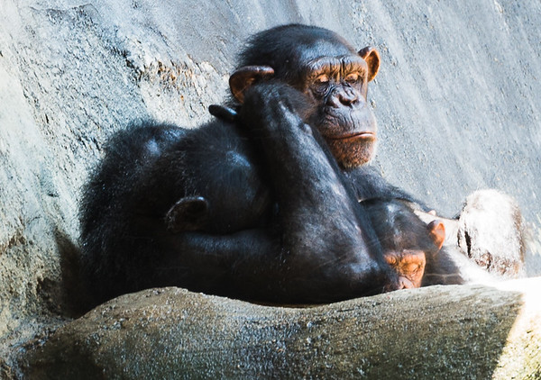 Zoo aniimals
