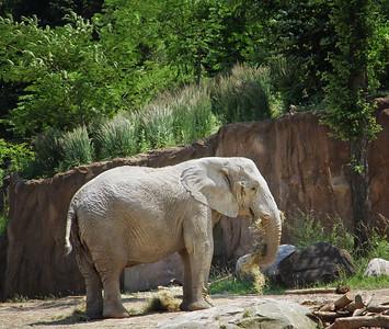 Elephant Cleveland Metropark Zoo