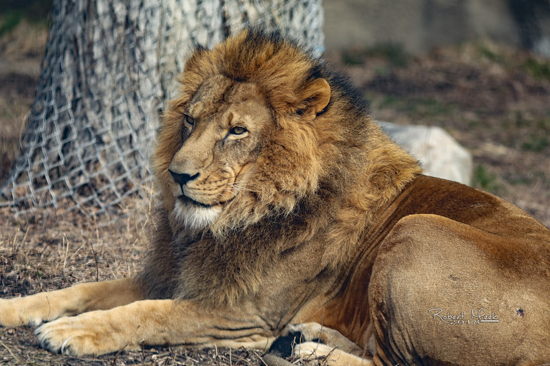 ZooPics2018Spring (22 of 51)