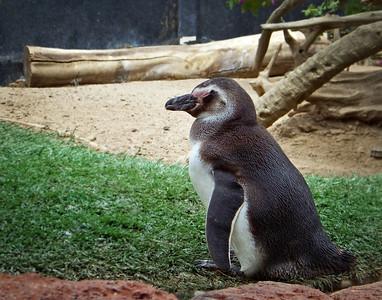 Penguin Sea World SanDiego, CA 6/2009