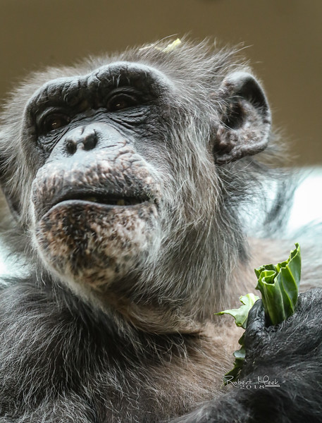 ZooPics2018Spring (36 of 51)