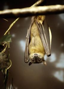 Bat Cleveland Metroparks Zoo