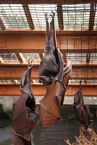 Bats Columbus Zoo 2012