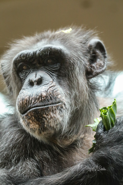 ZooPics2018Spring (35 of 51)