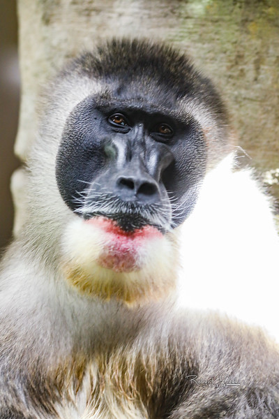 ZooPics2018Spring (32 of 51)