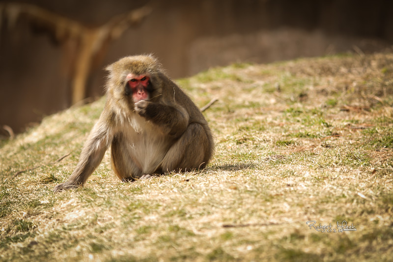 ZooPics2018Spring (28 of 51)