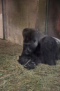Columbus Zoo 2012