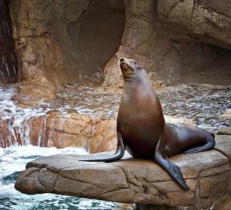 Sea World SanDiego, CA 6/2009
