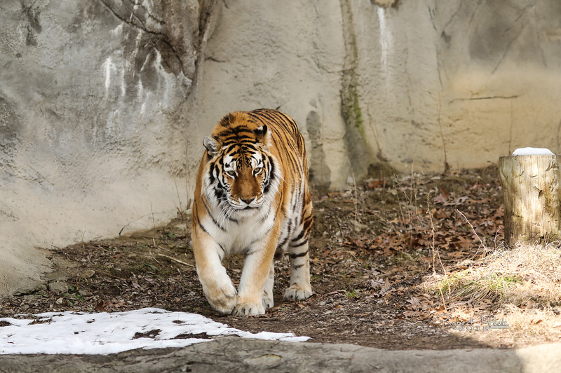 ZooPics2018Spring (19 of 51)