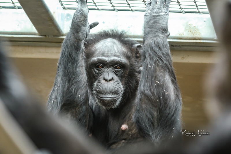 ZooPics2018Spring (39 of 51)