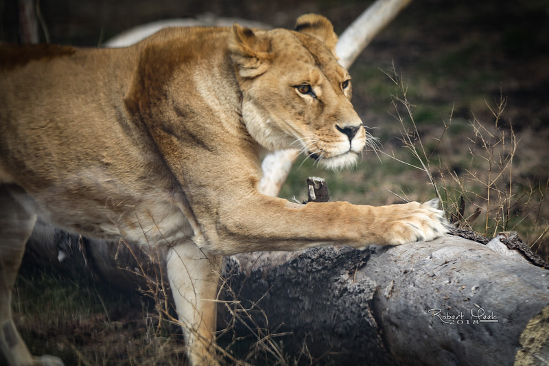 ZooPics2018Spring (23 of 51)