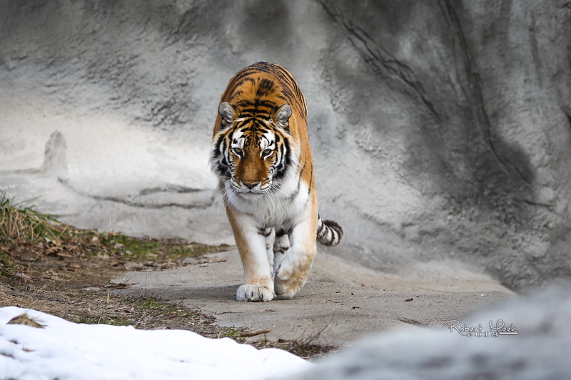 ZooPics2018Spring (18 of 51)