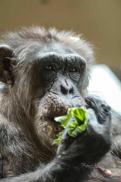ZooPics2018Spring (37 of 51)