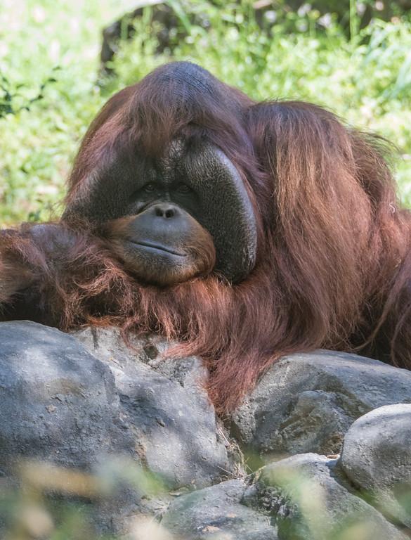 IMAGE: https://photos.smugmug.com/Zoo-Atlanta-2016/i-RqrQTTz/0/1ed69c1a/XL/Zoo-111-XL.jpg
