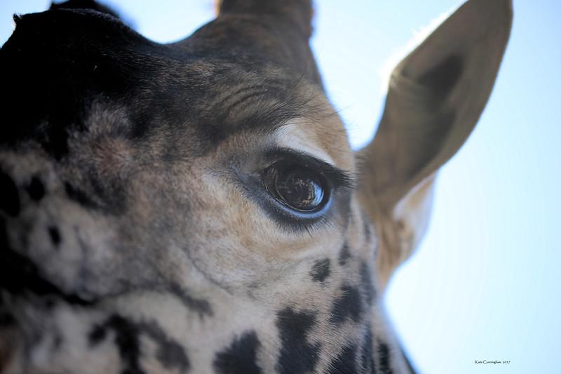 IMG_2912 Giraffe Eye Signed.jpg