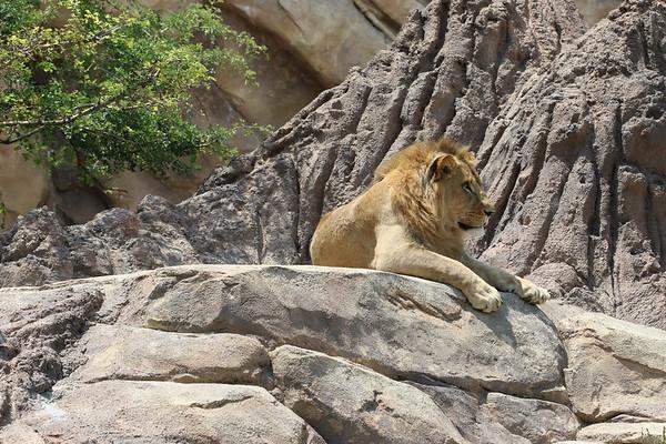 Zoo June 2017 Pinny