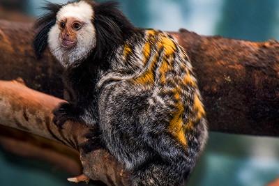 2015 Philadelphia Zoo