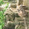 White Nose deer
