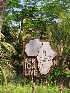 Africa Live!