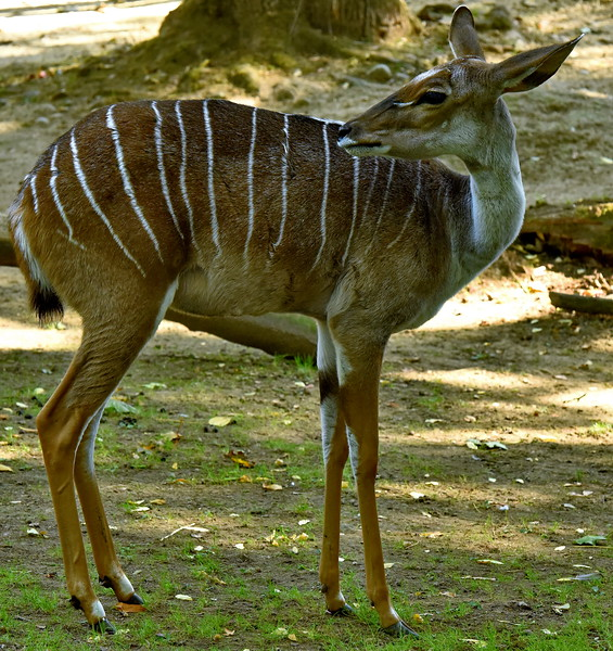 Gazelle Zolli Basel
