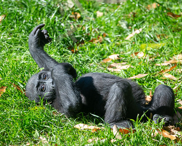 Playful Mbani