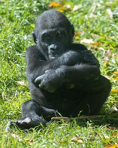 Mbani at 12 months