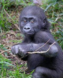 Mbani at 10 months