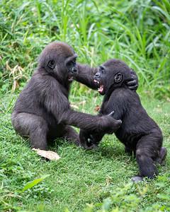 Saambili & Mbani: Intense Conversation